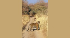 jim_corbett_resorts