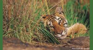jim_corbett_hotels_booking
