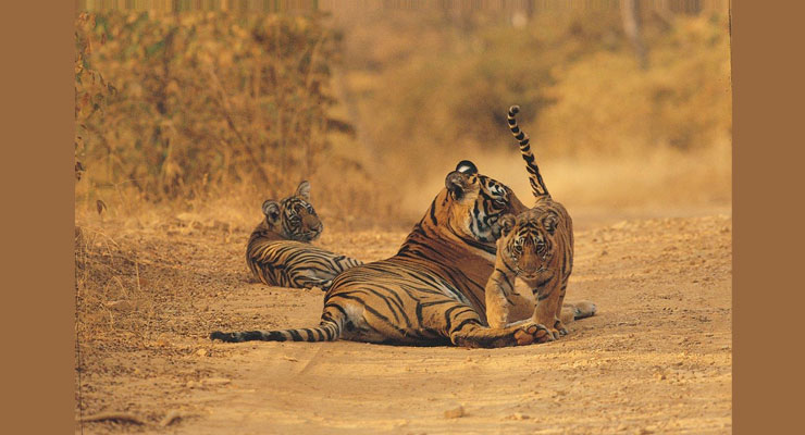 jim_corbett_hotels_deals_and_packages