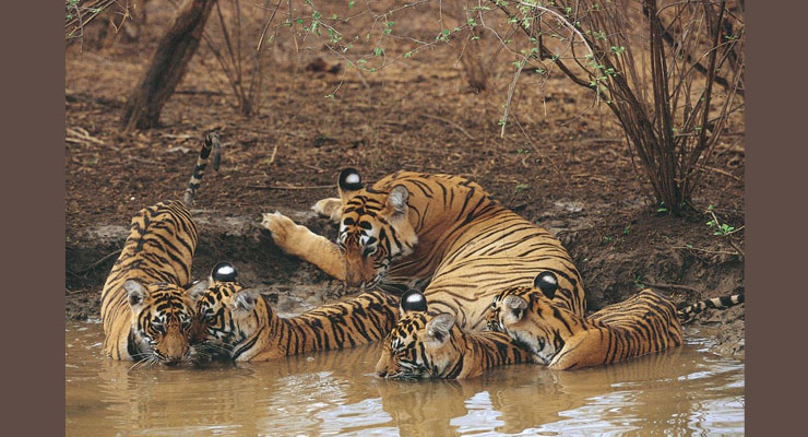 jim_corbett_national_park_ticket_price