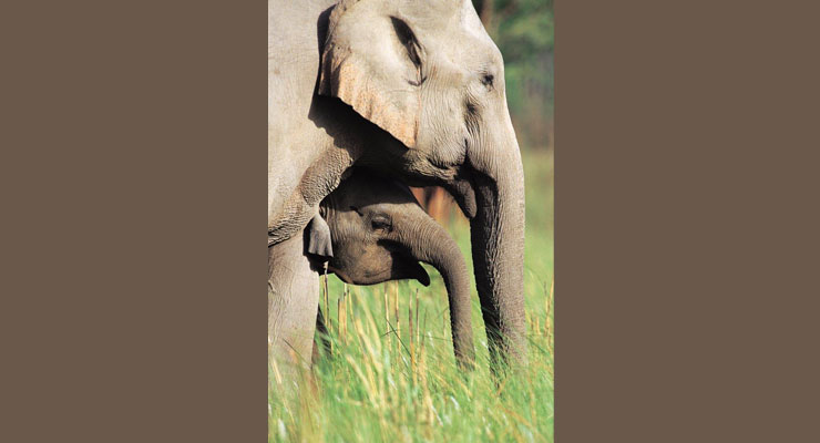 elephant_safari_in_corbett_price