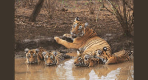 national_park_of_india